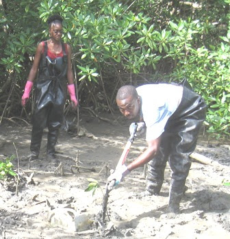 Mangrove Clean-up, Jamaica